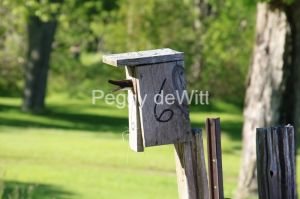Birdhouse Tail #3534