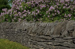 Fence Rock Lilacs 2 #2984