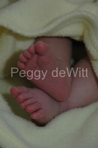Baby Feet (v) #1077