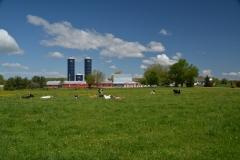 Barn Dairy Farm Gilead #3061