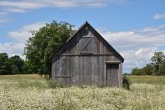 Barn Daisy Field #3062