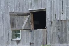 Barn-Door-Chicken-v-3645