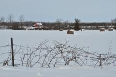 Barn Field Winter #3076