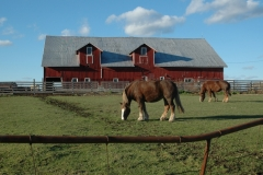 Barn Horse Napanee #2854