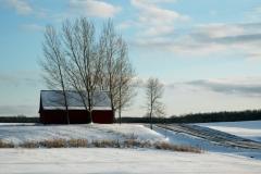 Barn Northport Winter #739