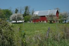 Barn Red Cooper Spring #1146