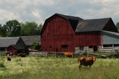 Barn Red Lonsdale #1686