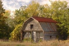 Barn Shed Old Napanee #1750