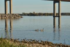 Belleville Bridge 2013 (v) #3097