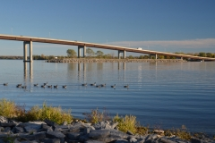 Belleville Bridge Geese #3100