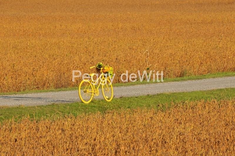 Bike in Field #3038