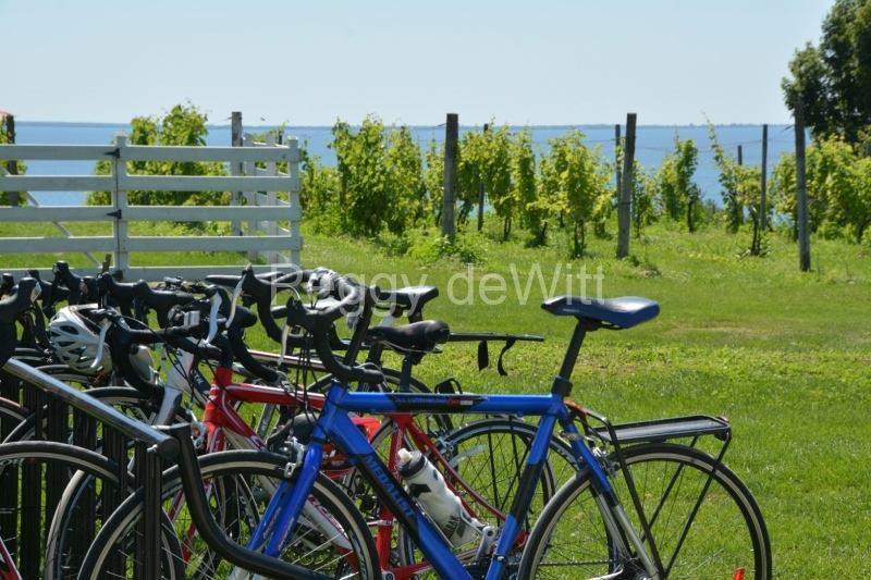 Waupoos Cider Co Bikes #3451