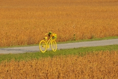 Bike in Field #3038