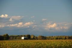 Big Island Farm #2806