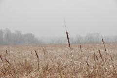 Big Island Reeds Winter #2921