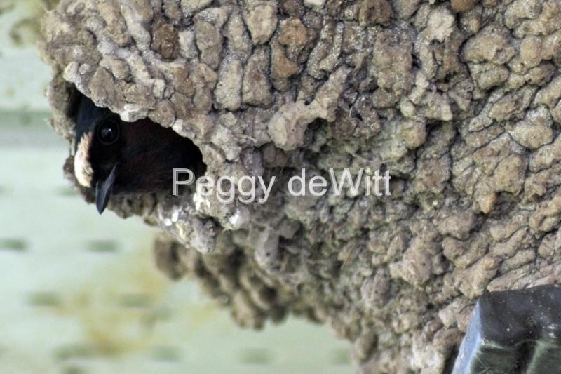 Bird Closeup #2931