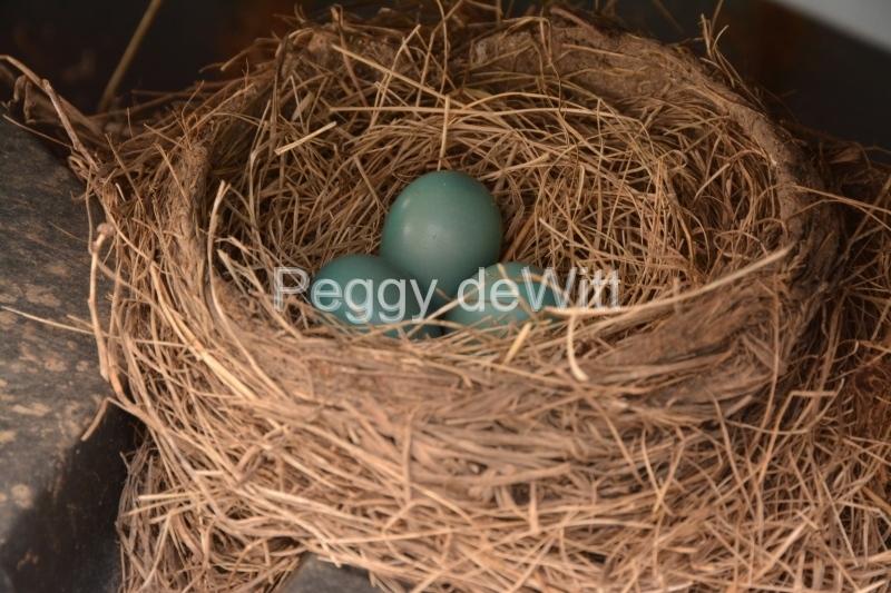 Bird Nest Three Eggs #3139