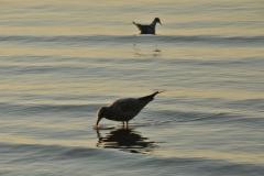 Bird Shore #2936