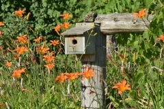 Birdhouse-Day-Lilies-2938
