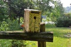 Birdhouse-Yellow-3112