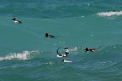 Birds Ducks #2941