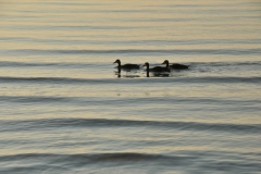 Birds Three #2942