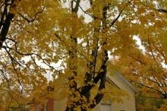 Black River Schoolhouse Fall (v) #1767