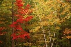 Bon Echo Park Tree Fall #1779