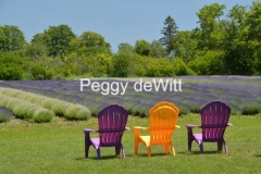 Chairs Purple & Yellow Lavender #3156