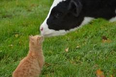 Cat Kitten & Calf #2922