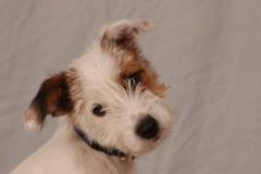 Dog Charlie #2133