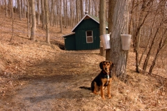 Sugar Bush Puppy #1059