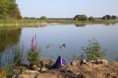 East-Lake-Ducks-Three-3676