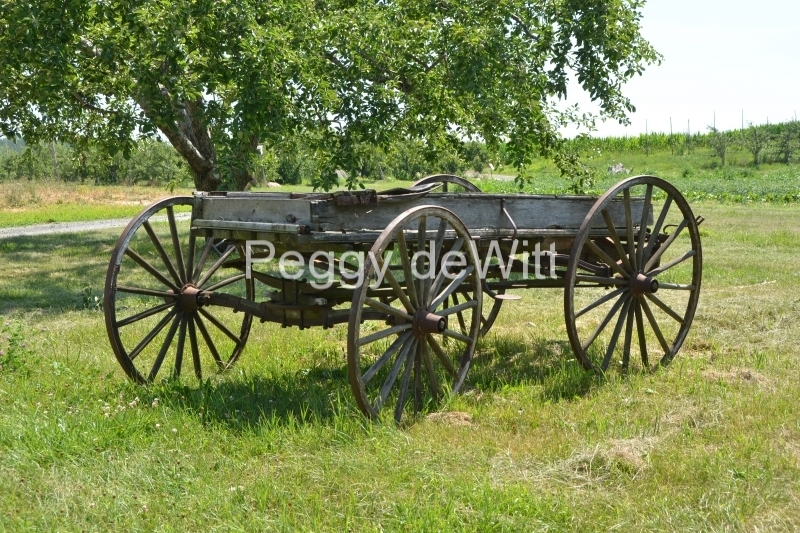 Wagon Orchard #3445
