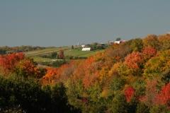 Farm Newtonville Bert  #2504