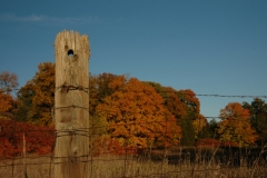 Fence Post Fall #1089