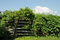 Fence Rail Cider Co #2975