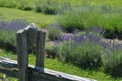Fence Rail Lavendar #9191