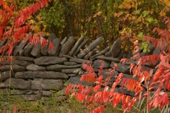 Fence Stone Red Fall #3194