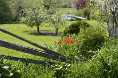Fence-Tulip-Scene-3681