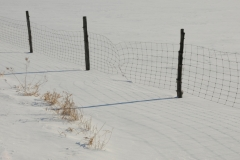 Fence Wire Winter #2377