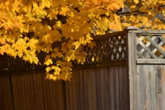 Fence Wooden Fall Leaves #2984