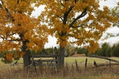 Gate Waupoos Fall #2165