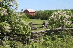 Lilacs Fence Barn #3584