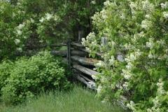 Lilacs Fence White #1557