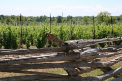 Vineyard Fence Rail #3440