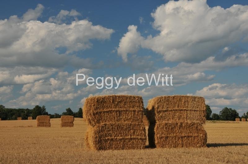 Bales Straw Large #2852