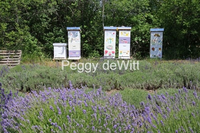 Beehives Lavender #3131