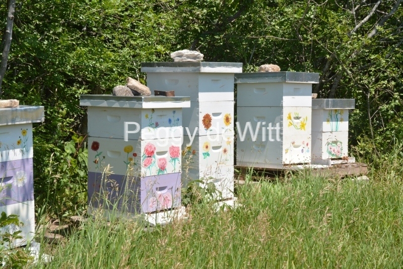 Beehives Lavender Farm Closeup #3532