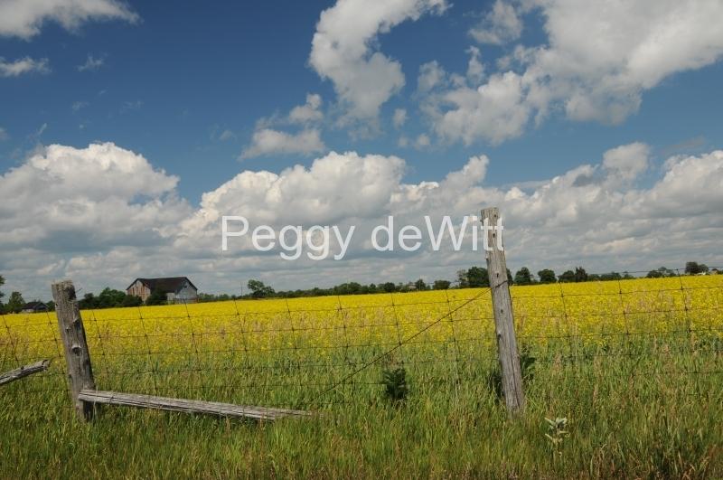Field Canola Fence #2146